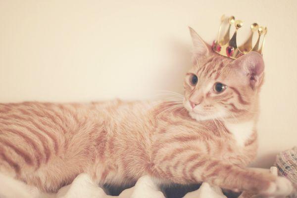 august-10-2012-01-32-57-kingcat